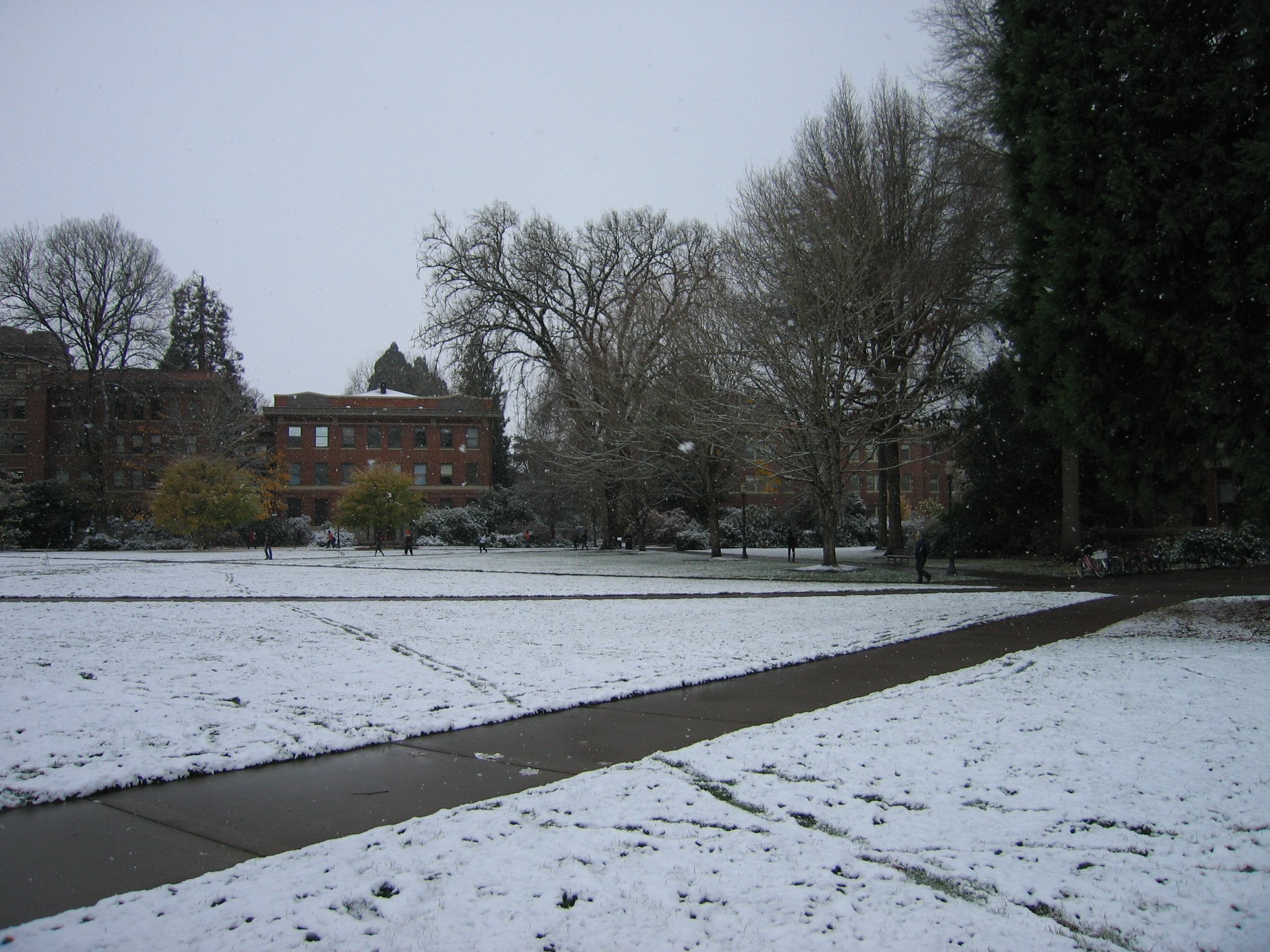 Snow In Corvallis Not Your Average Engineer